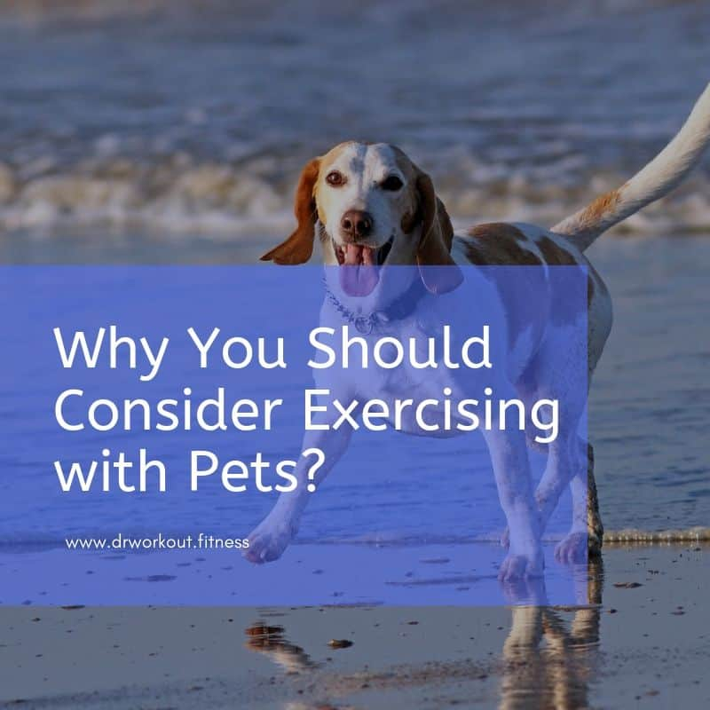 Why You Should Consider Exercising with Pets
